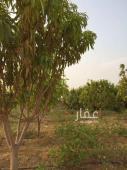 استراحة للايجار في حي المنظقة الصناعية في جيزان