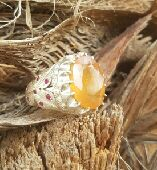 خاتم ياقوت أصفر أفريقي