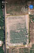 مزرعة للبيع في حي الحفيا في المدينة