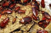شركة مكافحة حشرات شركة رش مبيدات مبيد
