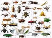 شركه رش مبيد جميع الحشرات بالضمان وبدون رائحه