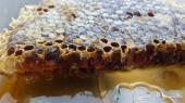 لااهل المدينه اخر5 كيلوا من عسل ربيعي  شمع بيتات ربيعي  مقطوف من العيدان وعسل مجرى وعسل السدر من رجا