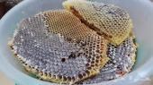 عسل ربيعي  شمع وعسل مجرى والعسل السدر البلدي مف