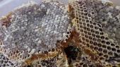 اهل الطايف عروض وتخفيض على عسل الشمع الربيعي
