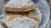 عسل الشهد الربيعي المختوم والعسل المجرى عليه عروض بمناسبة الاجازه