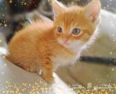 قط صغير للبيع بالدمام