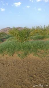 مزرعة للبيع في محافظة الرقيطا
