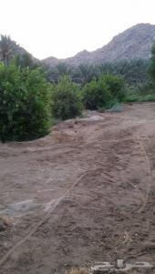 مزرعة للبيع ذات مساحة كبيره بصك شرعي