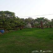 مزرعة للبيع غرب بيش المدينة الاقتصادية