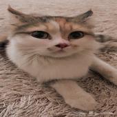 قطه اليفه جدا مع ابنها