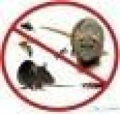 رش مبيدات نمل ابيض مكافحة حشرات صراصير فئران