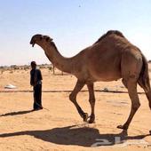 من لديه قارمن للبيع في الرياض يكون مستخدم ونظيف