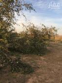 مزرعة للبيع في حي الرمانة في المدينة
