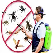 رش المبيدات ومكافحة الحشرات بالضمان