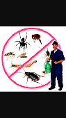 مكافحة حشرات بدون رائحة بدون مغادرة المنزل