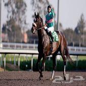 حصان سباق