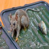 شركة مكافحة الفئران بالرياض مكافحة