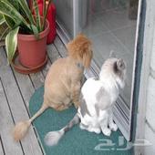 حلاقة وترويش وفندقة قطط