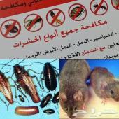 شركة رش مبيدات مكافحة حشرات نمل فئران صراصير