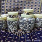 بذور يسر العربي المورنقا