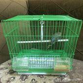 طير ببغاء لونه ازرق