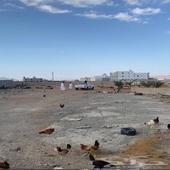 ارض زراعية في الحمراء خلف مصنع البلاستيك (9000م)
