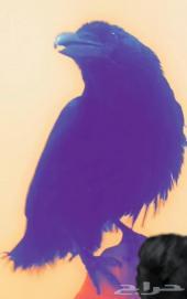 غراب Raven