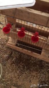 سقايات للدجاج وجميع الطيور