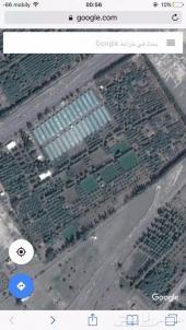 مزرعة للبيع بالنقد في المدينة المنورة