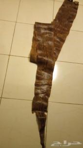 جلد ثعبان أصلة صخرية