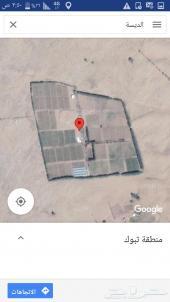 مزرعه راكان بالقرب من الديسه
