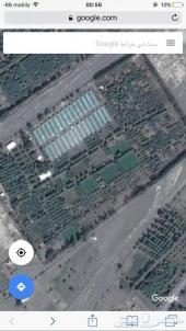 مزرعه بالمدينة المنورة - مشروع زراعي بدخل سنو