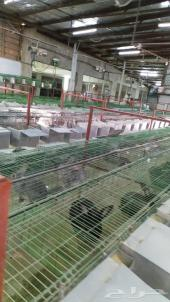 مزرعة انتاج ارانب للبيع