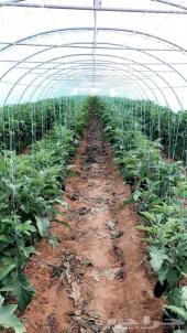 مزرعة بيوت محمية للإيجار
