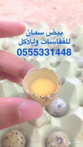 بيض سمان للفقاسات وللأكل