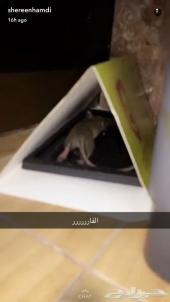 تخلص من الصراصير النمل الفئران بمنزلك