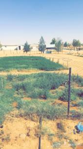 مزرعة للإيجار