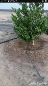مزرعه الايجار اوالبيع الامساحه132880الف