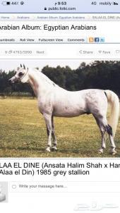 حصان خط سرعه كربت