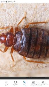 مكافحة الحشرات البق الصراصير العته الفئران