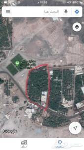 مزرعه مساحتها 13677.67 م  للبيع او للإيجار