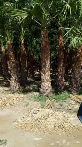 مزارع الاشجار و الشجيرات توريد للقطاع الخاص