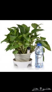 تنقيط ماء للشجر