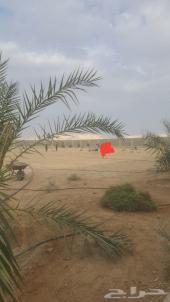 مزرعه في ضرماء مخطط العارضيه مساحة6090م