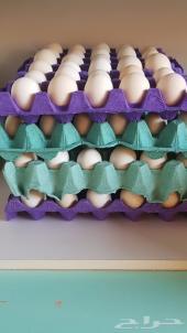 بيض دجاج فيومي قولد ( الأمهات من الكويت )