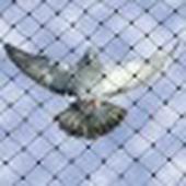 طارد الطيور مانع وقوف الحمام بالمدينة المنورة