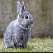 وبر و أرانب صغيرة حبوبة وجميلة