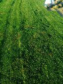 مزارع الخرج لجميع انواع الثيل