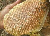 عسل صافي وقرصان للبيع