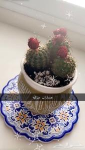 صبارات و نباتات منزليه جميله